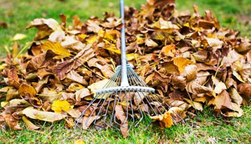 fall leaves and a rake